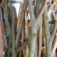 Kratzbäume aus Naturholz – Der Weg vom Stamm zum Kratzbaum